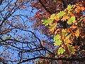 Leaves - Flickr - mmarchin.jpg