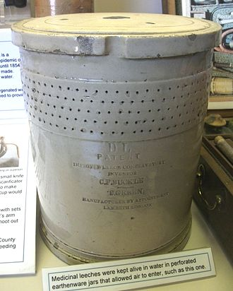 Hirudo medicinalis - Earthenware jar for holding medicinal leeches