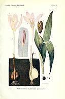 Lehrbuch der Botanik (Taf. 31) (8071716547)