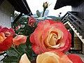 Les roses des contamines - panoramio (1).jpg
