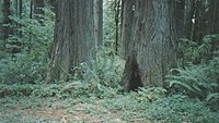 Lewis and Clark State Park (Washington); Old Growth (1649679326).jpg