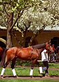 "Lexington Kentucky - Keeneland Race Track ""Paddock in Springtime"" (2144539145) (2).jpg"
