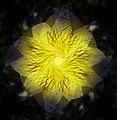 Lilac Flower Kaleidoscope.jpg