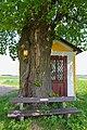 Linde östlich von Groß-Siegharts 2015-05 Stamm NDM WT-047.jpg