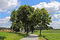 Lindenallee bei Schacherdorf 02 2015-06 NDM WT-055.jpg