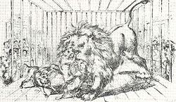Walka psów z lwem
