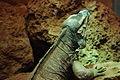 Lizards Alive - Fernbank Museum - Atlanta - Flickr - hyku (2).jpg