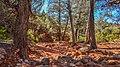 Llama Trail (40025885131).jpg