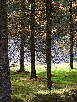 Llyn Brianne through the trees, Powys - geograph.org.uk - 1066732