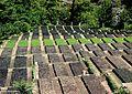 Local plantation.jpg