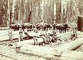 Loggers seated on logs with team of oxen in the background, Washington, ca 1900 (HESTER 143).jpeg