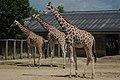 London zoo, UK (4827846440).jpg