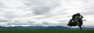 Polk County, Oregon - Agricultural field and tree near Perrydale