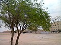 Lonely tree at Al Khor,Qatar - panoramio.jpg
