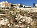Mġarr cart ruts 04.jpg