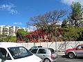 Madeira em Abril de 2011 IMG 1788 (5664218312).jpg
