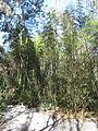 Magnolia Plantation and Gardens - Charleston, South Carolina (8556568588).jpg