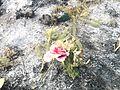 Maklár, cemetery solid waste burning 2017.jpg