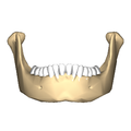 Mandible close-up anterior2.png