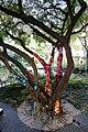 Manila, makati, giardini del museo ayala 03.jpg
