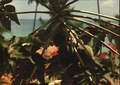 Martinique papaws.tiff