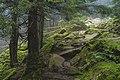 MarusyaSlobozhan forest2.jpg