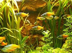 En el acuario - 3 10