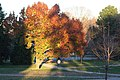 Michigan Fall Tree at Sunset (293360116).jpg