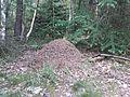 Mierenhoop in Nationaal Park Sallandse Heuvelrug (2).jpg