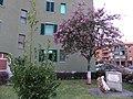Milano - quartiere Vialba I - 03.jpg
