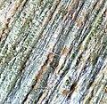 Monographella nivalis-Big close-up-1.jpg