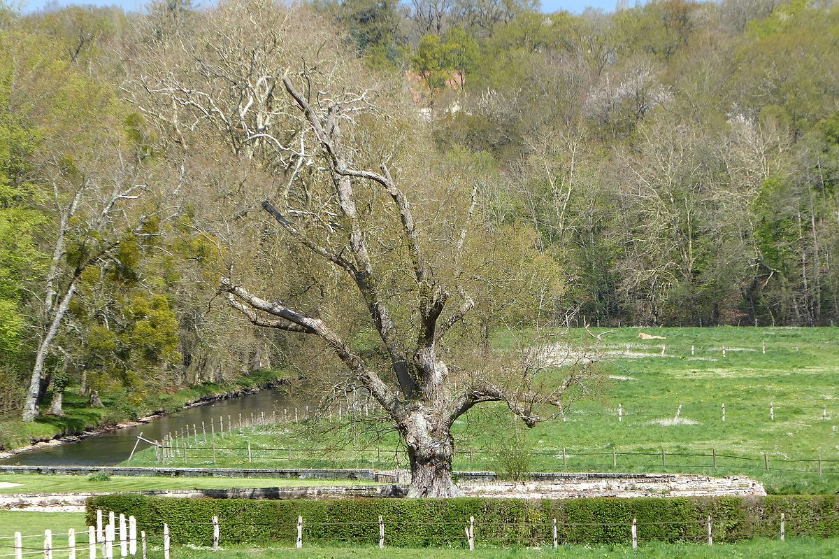 Montigny sur avre wikip dia - Arbre provencal ...