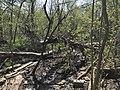 Muddy Path.jpg