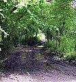 Muddy track to Allt Llwyn-Cadfer - geograph.org.uk - 1344729.jpg