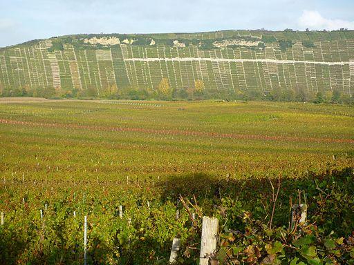 Mundelsheim - Weinanbau und Felsengärten im Neckartal