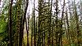 Munson Creek Falls (8238576306).jpg