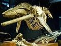 Museo Marítimo del Cantábrico (235).jpg