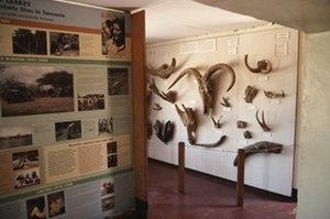 Olduvai Gorge Museum - Olduvai Gorge Museum interior