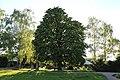 ND-7331-392 Kastanie Friedhof Bornheim-IMG 8227.jpg