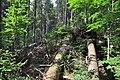 NPR Boubínský prales 20120910 08.jpg