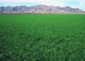 NRCSAZ02041 - Arizona (365)(NRCS Photo Gallery).jpg