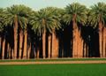 NRCSAZ02059 - Arizona (401)(NRCS Photo Gallery).tif