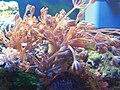 Nano-Reef Aquarium.jpg