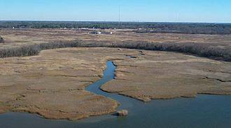 Nansemond River - Tidal marsh on the Nansemond River