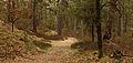 Nationaal Park Drents-Friese Wold. Locatie Dieverzand 03.jpg
