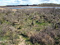 Nationaal Park Zuid-Kennemerland pic13.JPG
