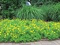 National Arboretum in June (23491048891).jpg