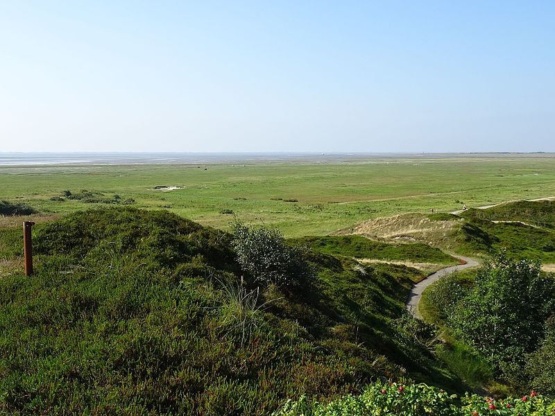 File:Nationalpark Niedersächsisches Wattenmeer - Spiekeroog - Inselinnere Landschaft (19).jpg