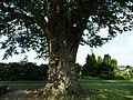 Naturdenkmal Linde Neuenkirchen Melle -Neben der Linde- Datei 2.jpg