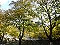 Nature - Natura (15725958966).jpg